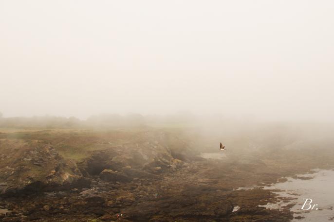 La brume et l'hirondelle